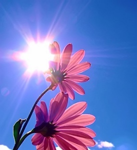 Window Treatments Blog Ideas And Advice On The Wonderful